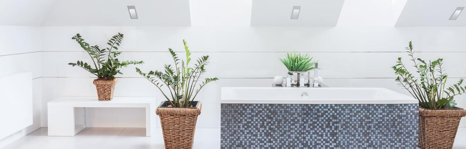 7 shower plants that will make you happier